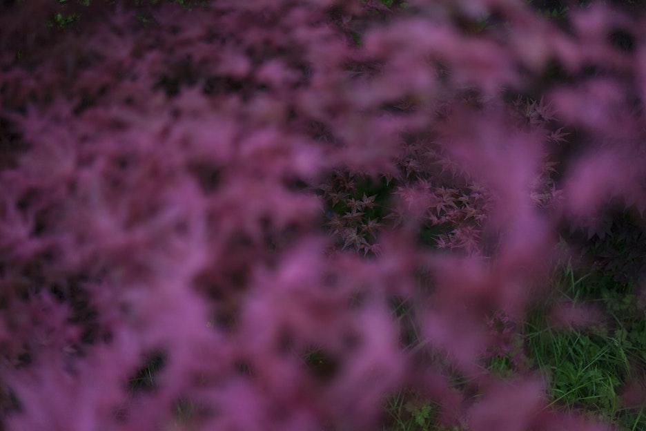 0905 1336 Dartmoor